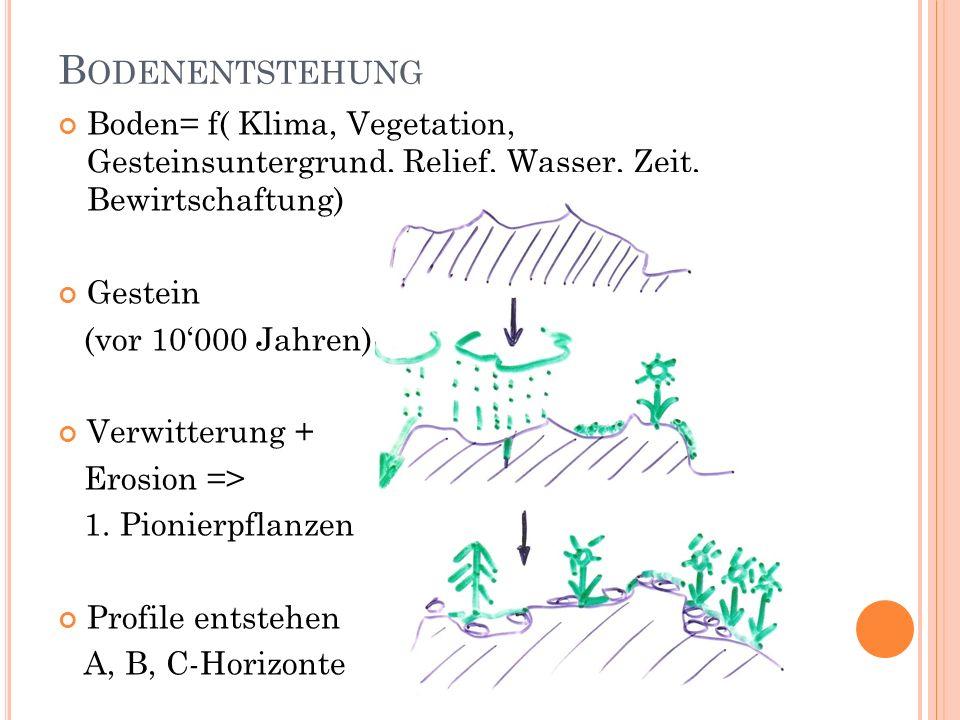 Bodenentstehung Boden= f( Klima, Vegetation, Gesteinsuntergrund, Relief, Wasser, Zeit, Bewirtschaftung)