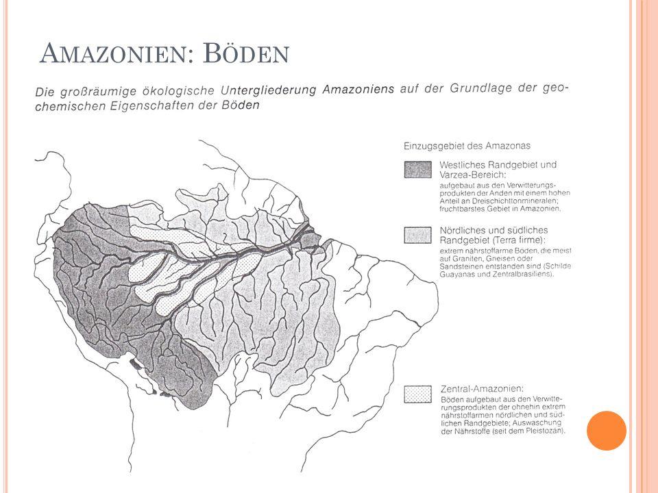 Amazonien: Böden