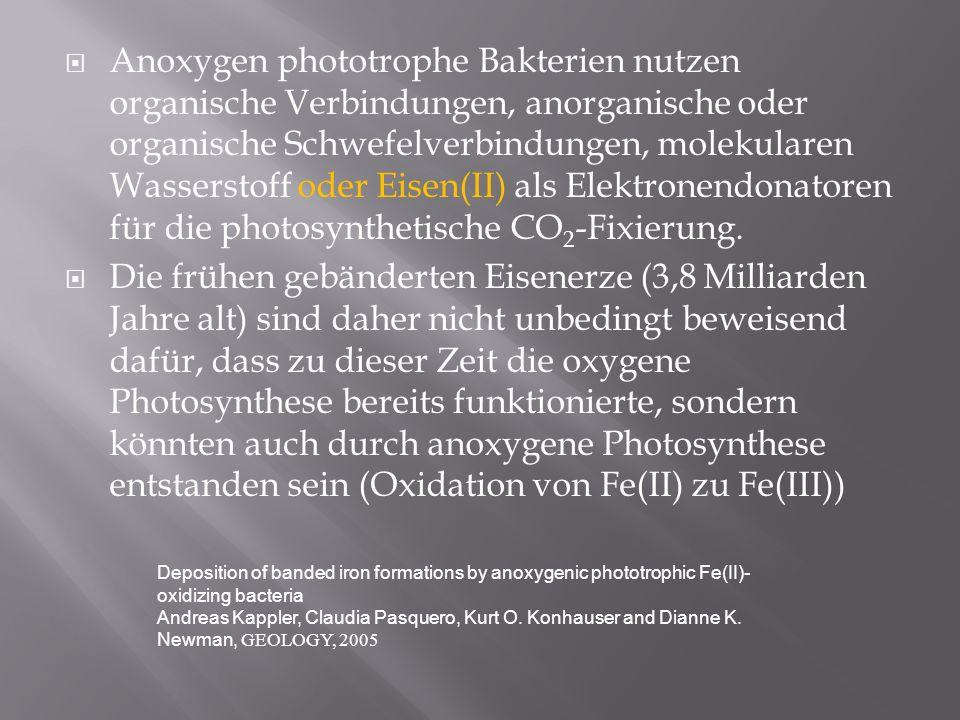 Anoxygen phototrophe Bakterien nutzen organische Verbindungen, anorganische oder organische Schwefelverbindungen, molekularen Wasserstoff oder Eisen(II) als Elektronendonatoren für die photosynthetische CO2-Fixierung.