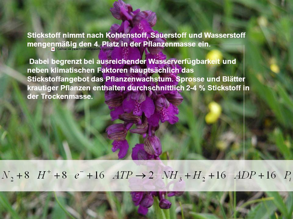 Stickstoff nimmt nach Kohlenstoff, Sauerstoff und Wasserstoff mengenmäßig den 4. Platz in der Pflanzenmasse ein.