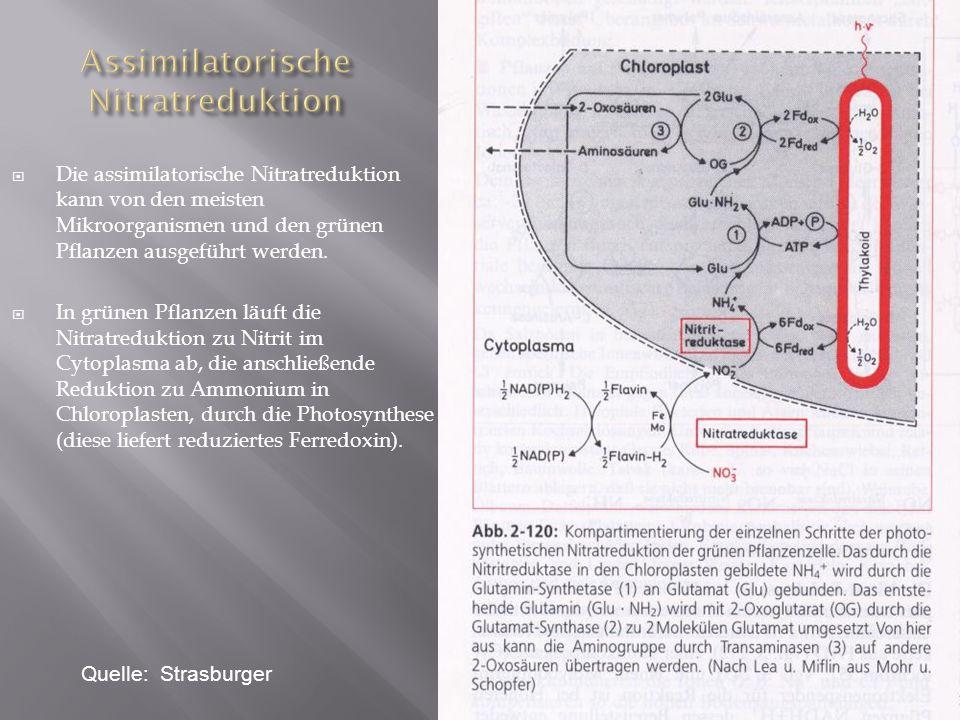 Assimilatorische Nitratreduktion
