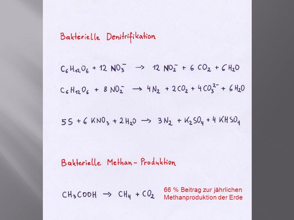 66 % Beitrag zur jährlichen Methanproduktion der Erde