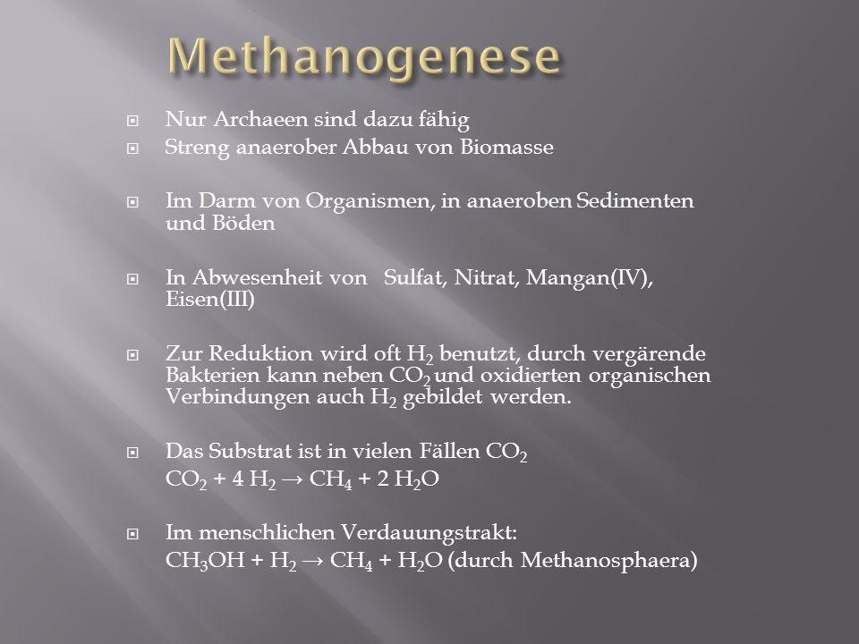 Methanogenese Nur Archaeen sind dazu fähig