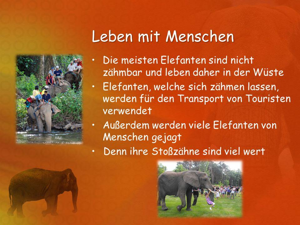 Leben mit Menschen Die meisten Elefanten sind nicht zähmbar und leben daher in der Wüste.