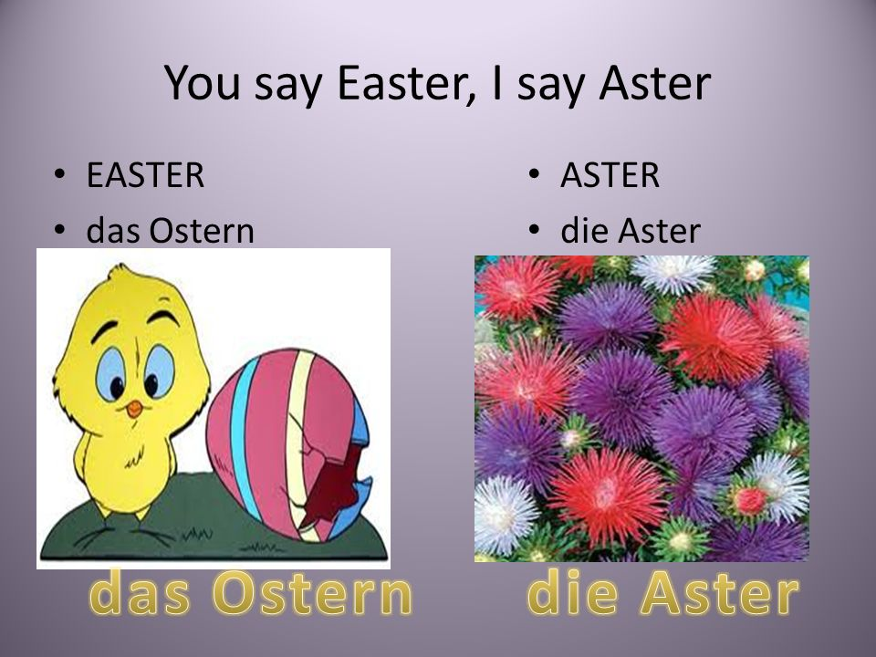 You say Easter, I say Aster