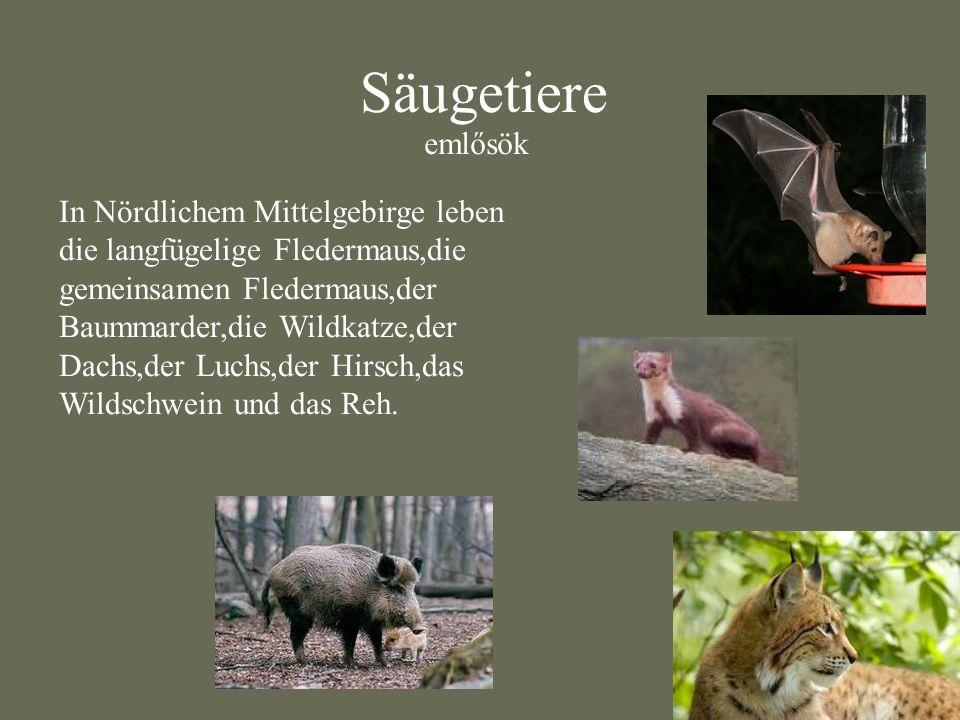 Säugetiere emlősök.