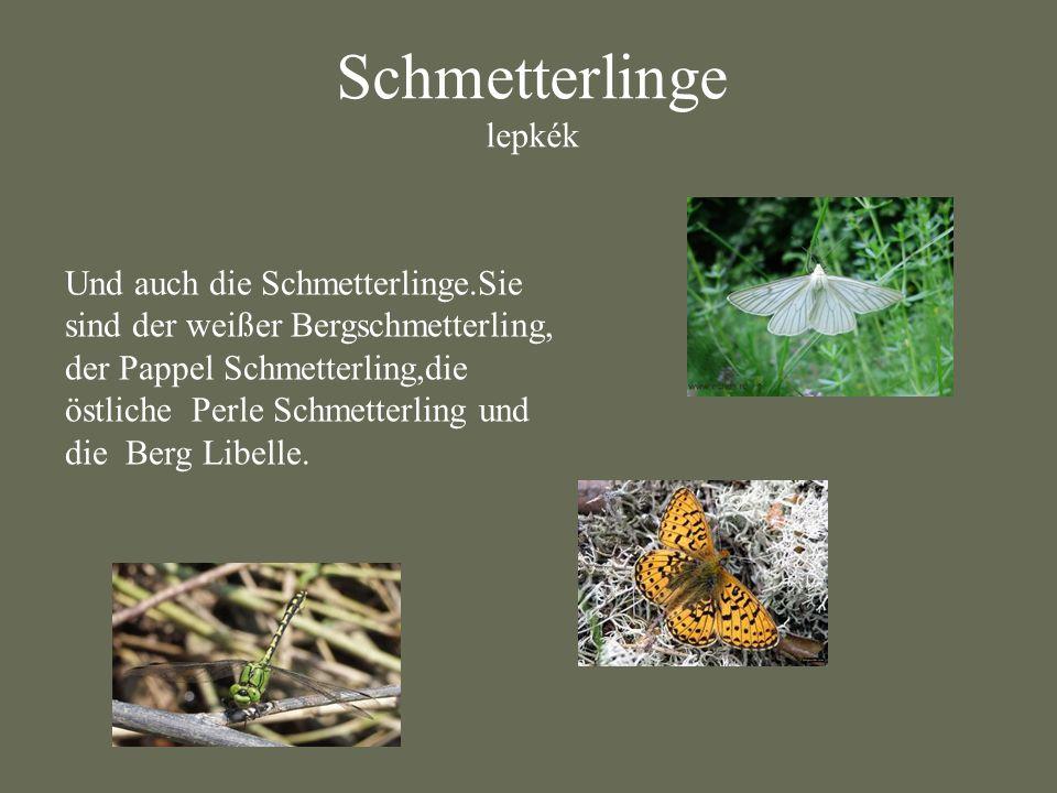 Schmetterlinge lepkék
