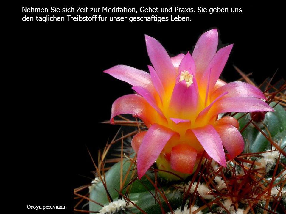 Nehmen Sie sich Zeit zur Meditation, Gebet und Praxis