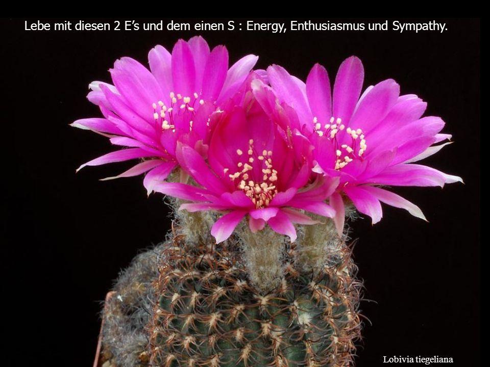 Lebe mit diesen 2 E's und dem einen S : Energy, Enthusiasmus und Sympathy.
