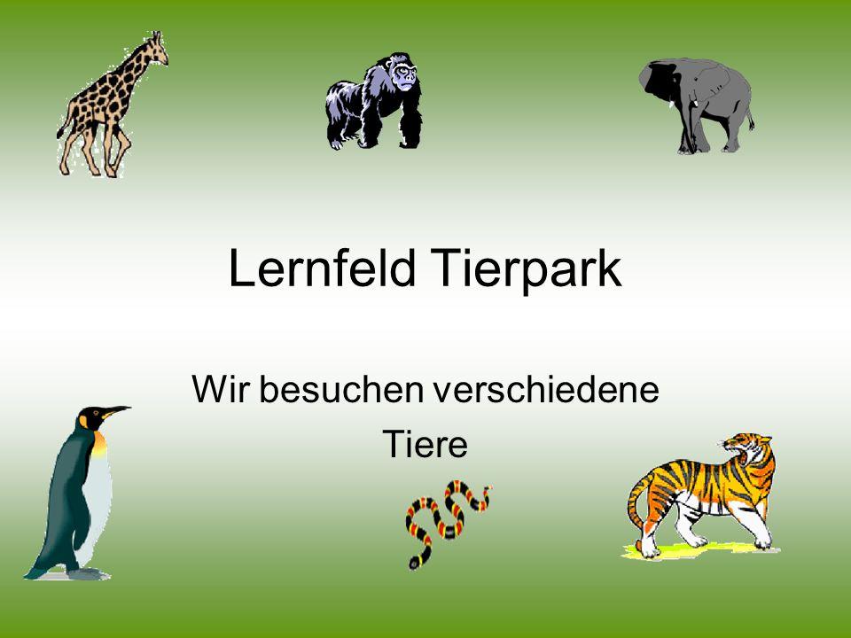 Wir besuchen verschiedene Tiere