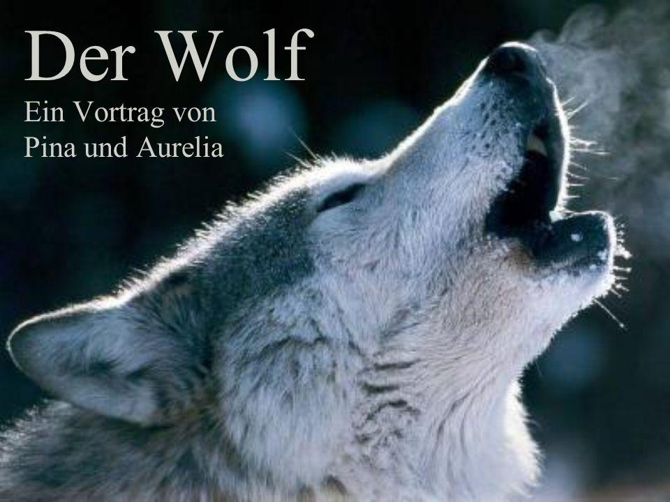Ein Vortrag von Pina und Aurelia