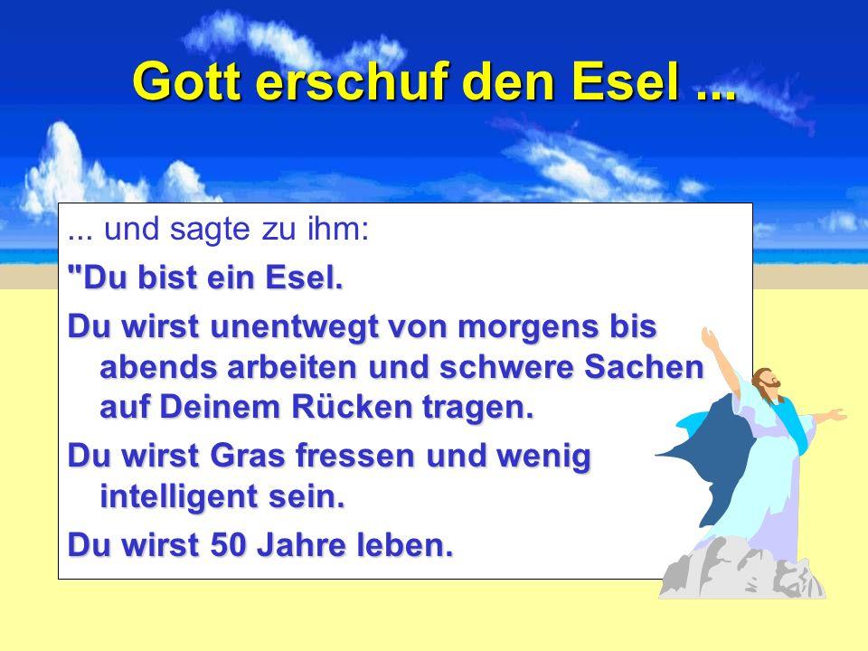 Gott erschuf den Esel ... ... und sagte zu ihm: Du bist ein Esel.