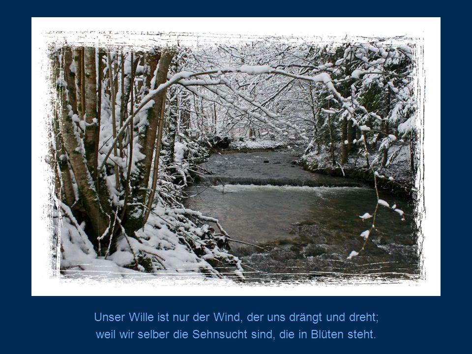 Unser Wille ist nur der Wind, der uns drängt und dreht;