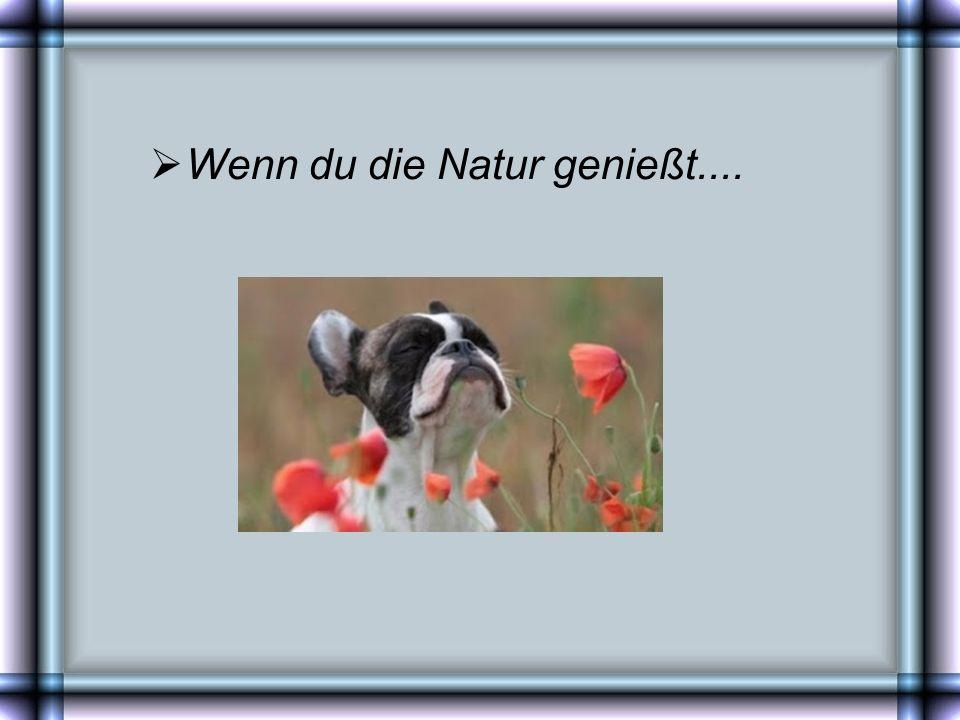 Wenn du die Natur genießt....