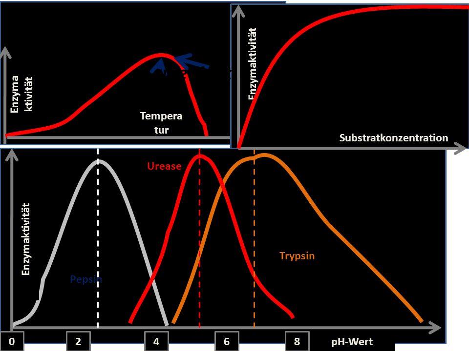 Substratkonzentration