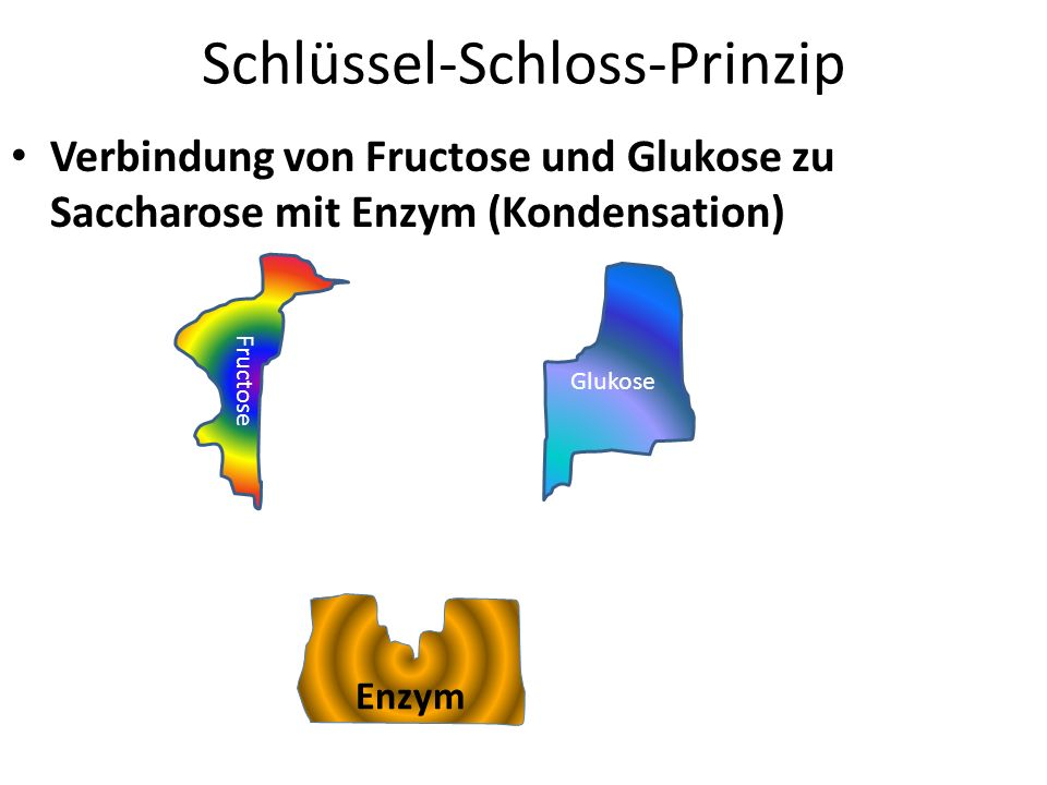 Schlüssel-Schloss-Prinzip