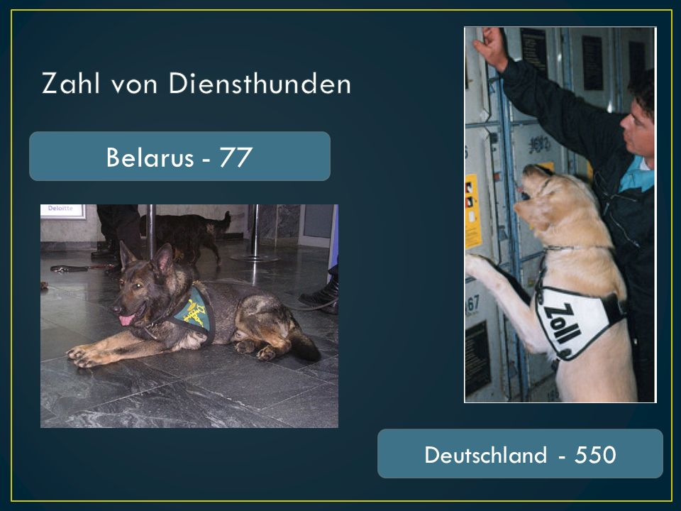 Zahl von Diensthunden Belarus - 77 Deutschland - 550