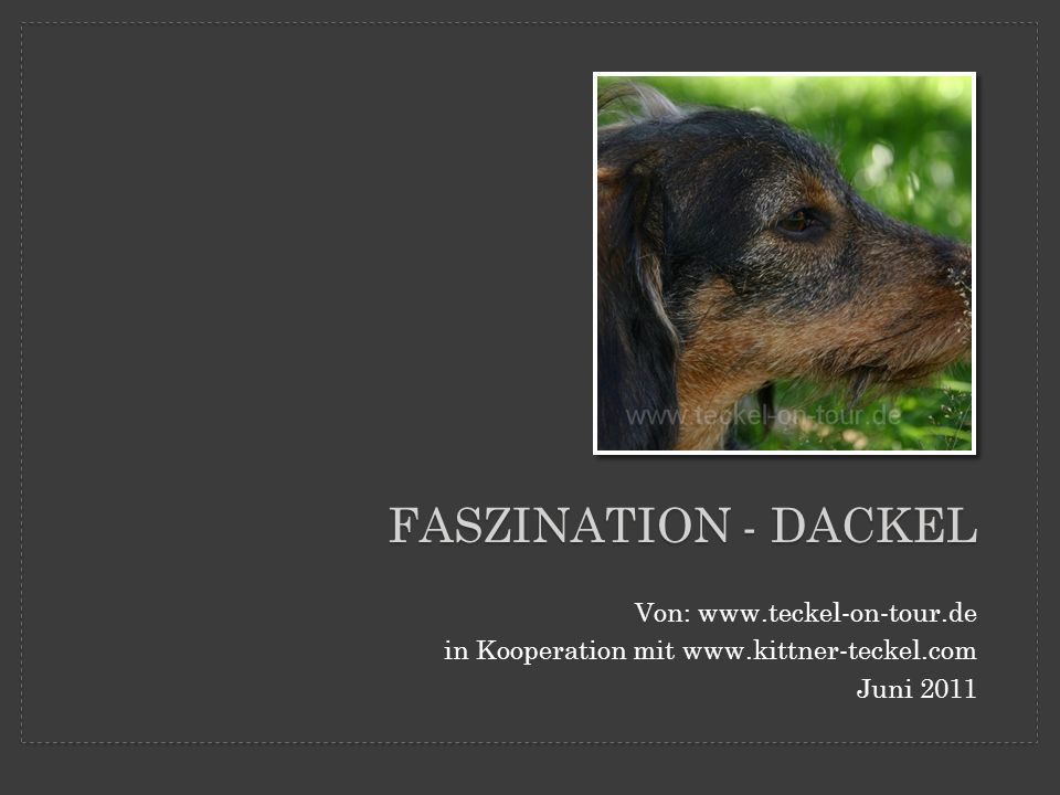 Faszination - Dackel Von: www.teckel-on-tour.de