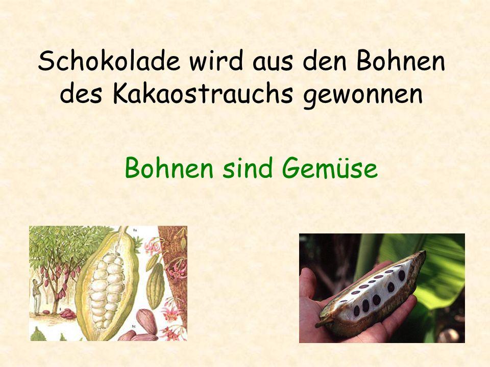 Schokolade wird aus den Bohnen des Kakaostrauchs gewonnen