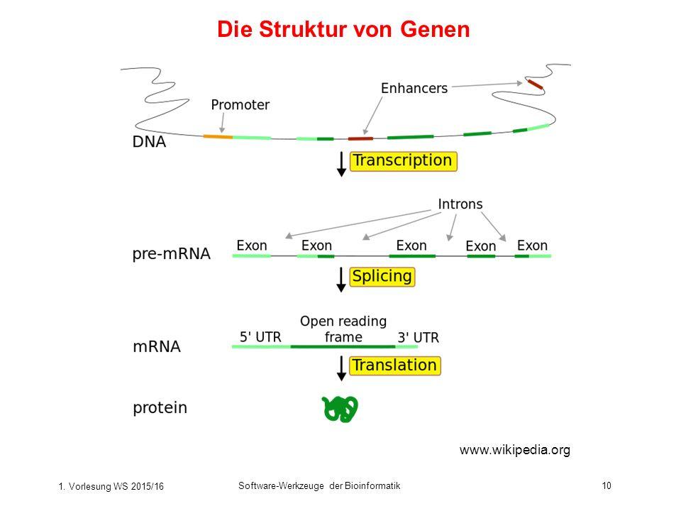 Die Struktur von Genen www.wikipedia.org