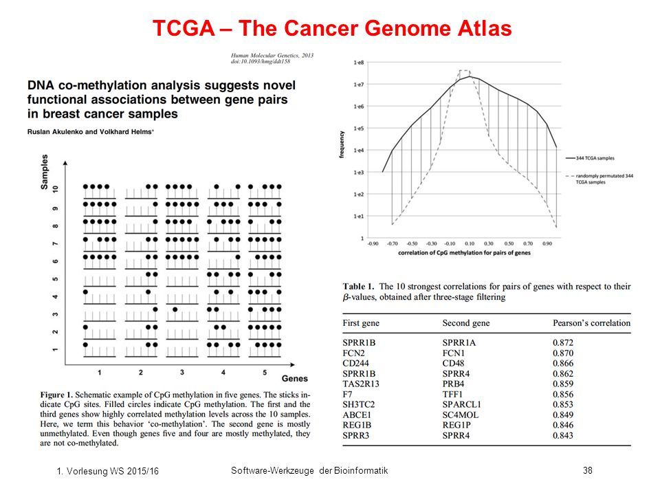 TCGA – The Cancer Genome Atlas