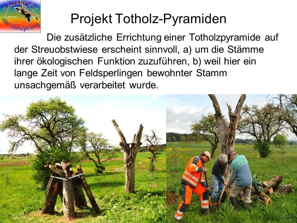 Projekt Totholz-Pyramiden