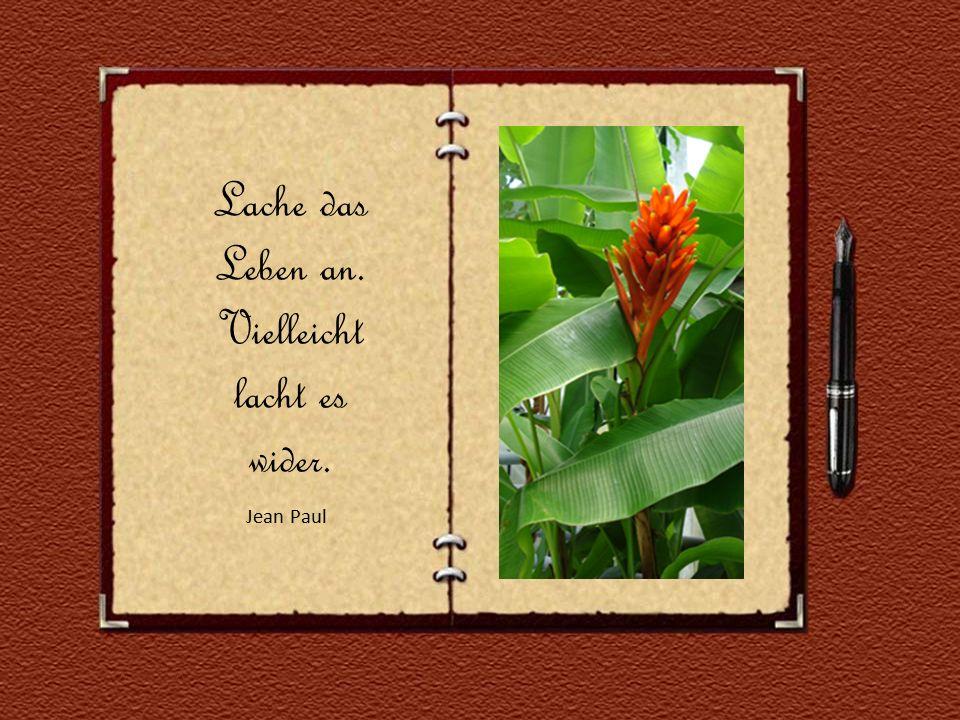 Lache das Leben an. Vielleicht lacht es wider. Jean Paul Jean Paul