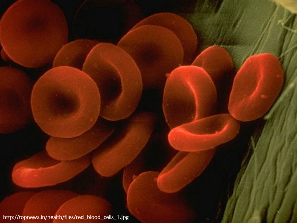 http://topnews.in/health/files/red_blood_cells_1.jpg