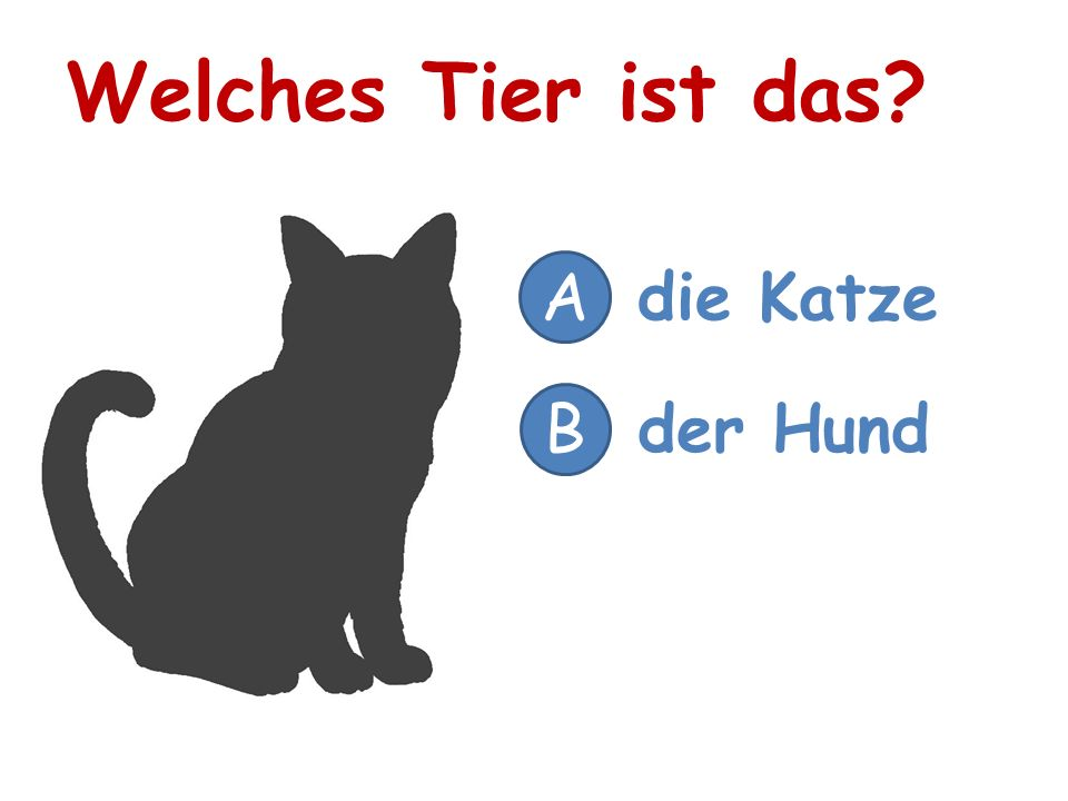 Welches Tier ist das A die Katze B der Hund