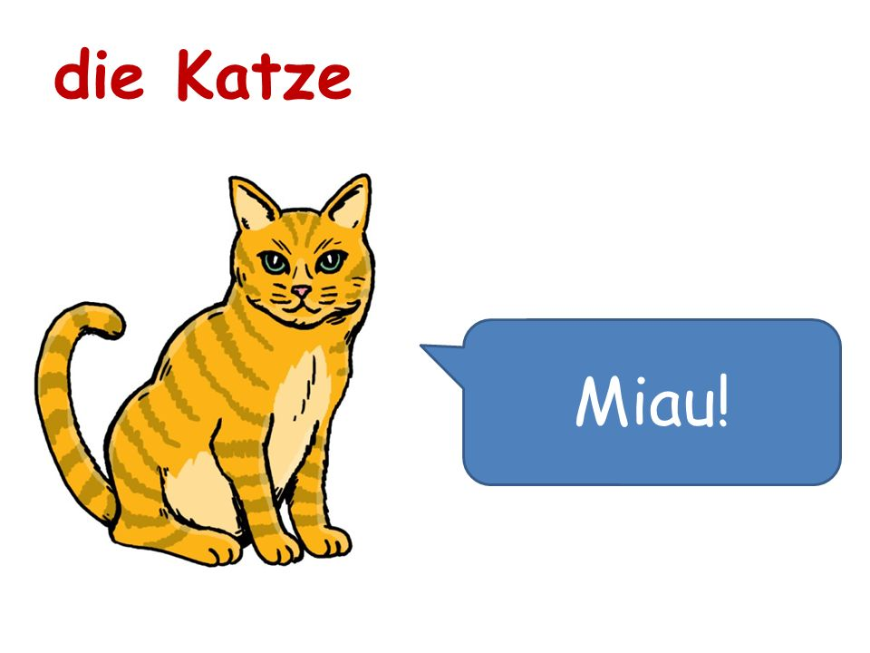 die Katze Miau!
