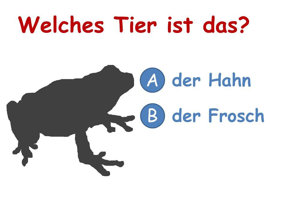 Welches Tier ist das A der Hahn B der Frosch