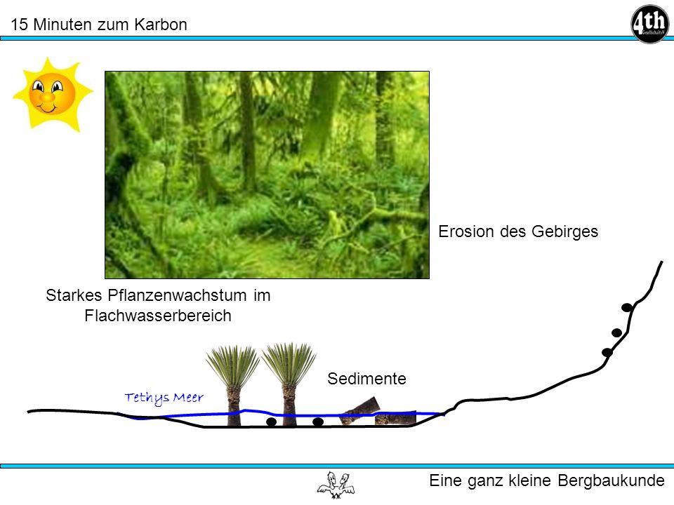 Starkes Pflanzenwachstum im Flachwasserbereich