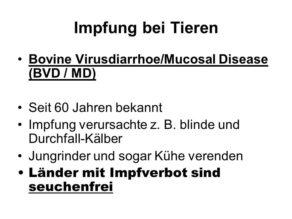 Impfung bei Tieren Bovine Virusdiarrhoe/Mucosal Disease (BVD / MD)