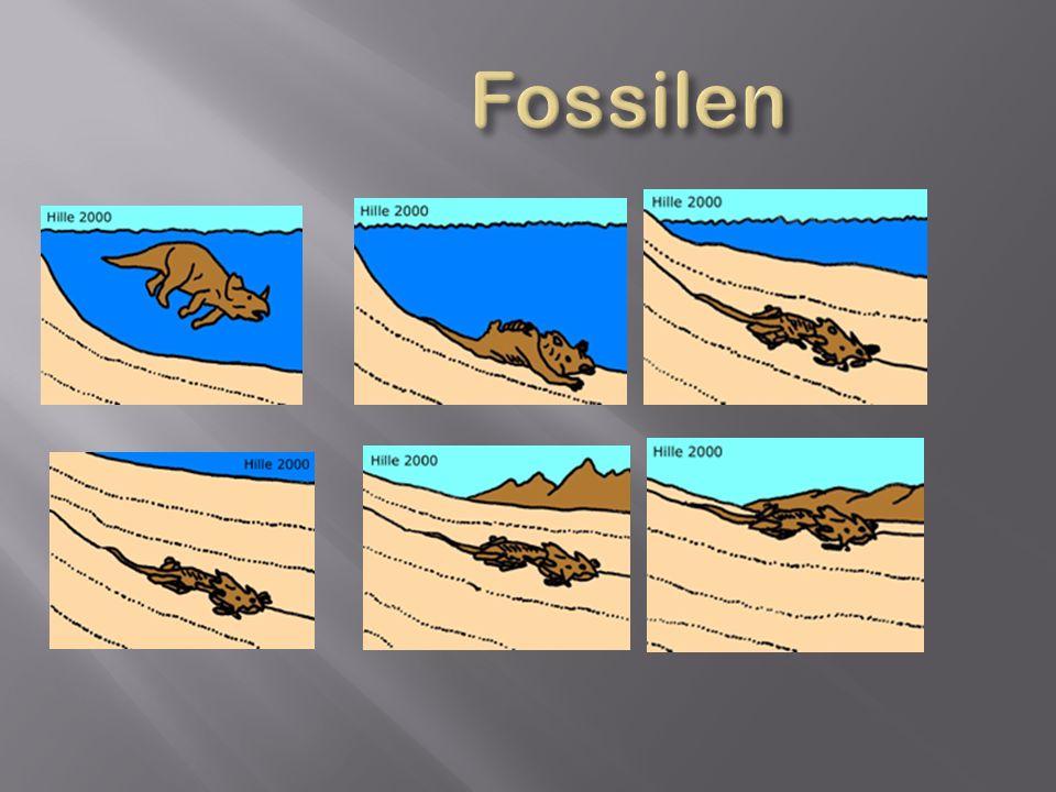 Fossilen