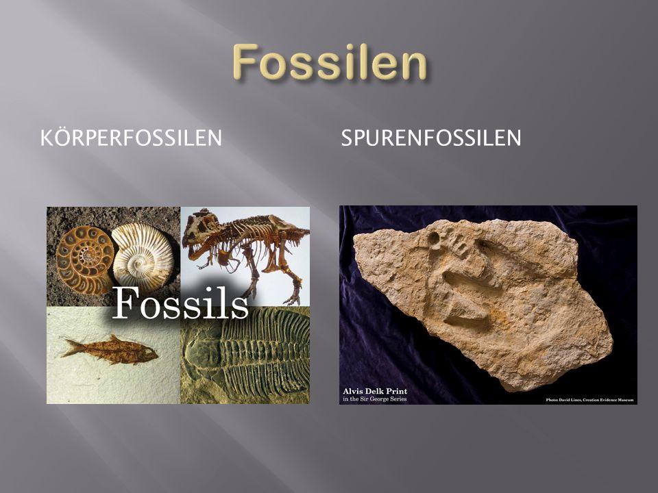 Fossilen kÖrperfossilen spurenfossilen