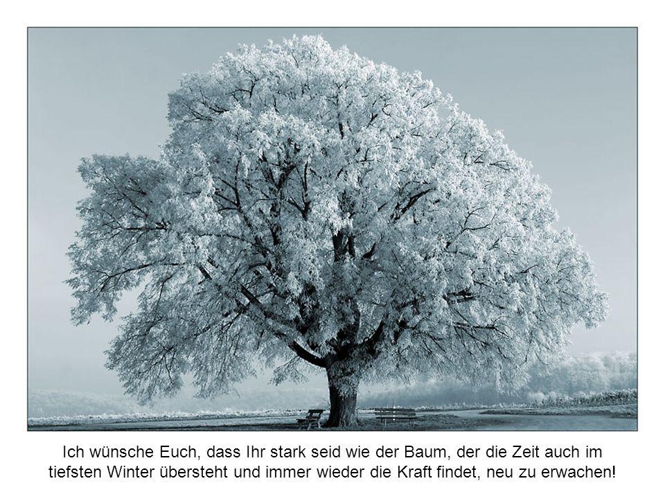 Ich wünsche Euch, dass Ihr stark seid wie der Baum, der die Zeit auch im tiefsten Winter übersteht und immer wieder die Kraft findet, neu zu erwachen!