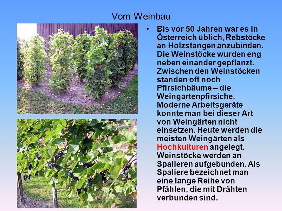 Vom Weinbau
