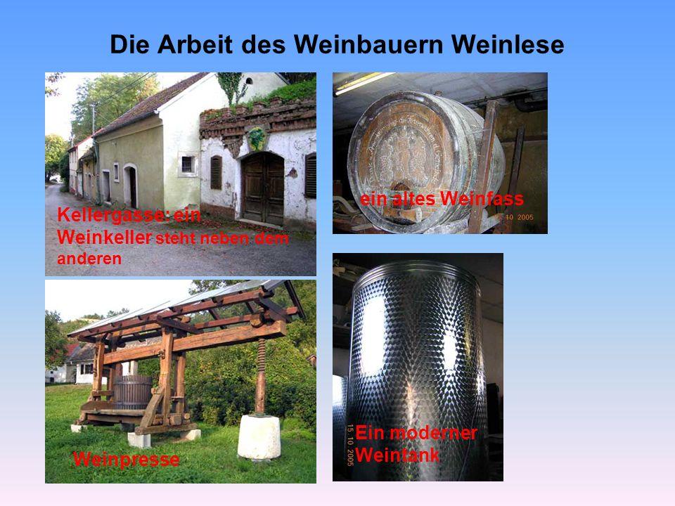 Die Arbeit des Weinbauern Weinlese
