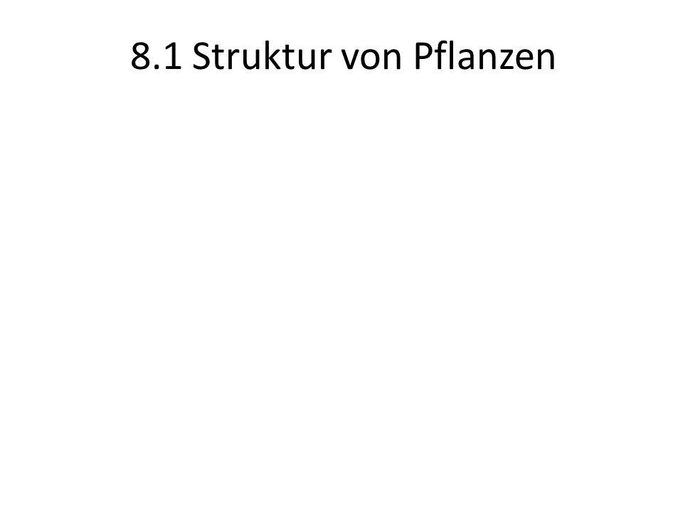 8.1 Struktur von Pflanzen
