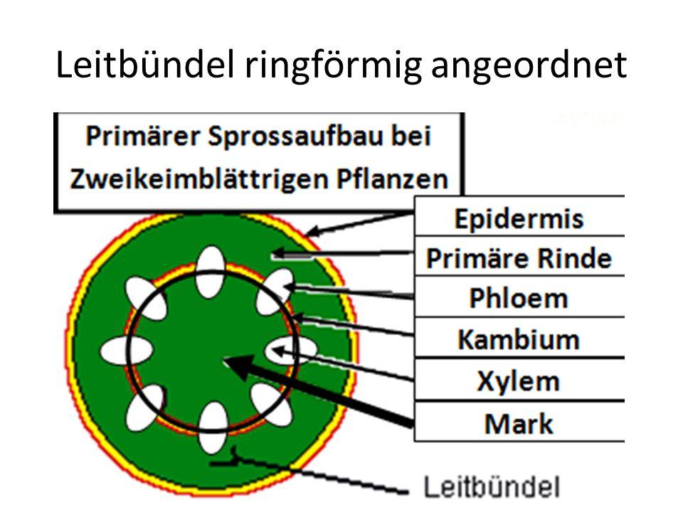 Leitbündel ringförmig angeordnet