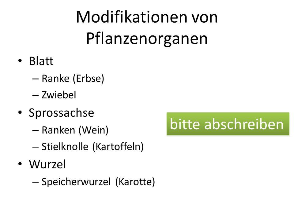 Modifikationen von Pflanzenorganen