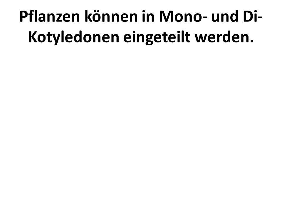 Pflanzen können in Mono- und Di-Kotyledonen eingeteilt werden.