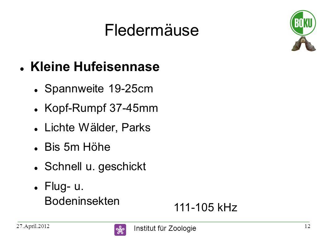 Fledermäuse Kleine Hufeisennase Spannweite 19-25cm Kopf-Rumpf 37-45mm