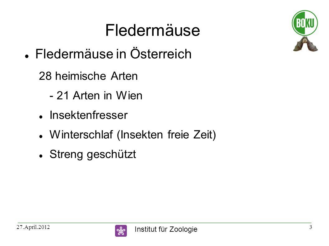 Fledermäuse Fledermäuse in Österreich 28 heimische Arten