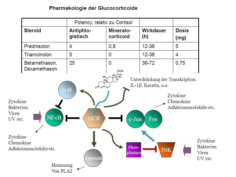 Potency, relativ zu Cortisol