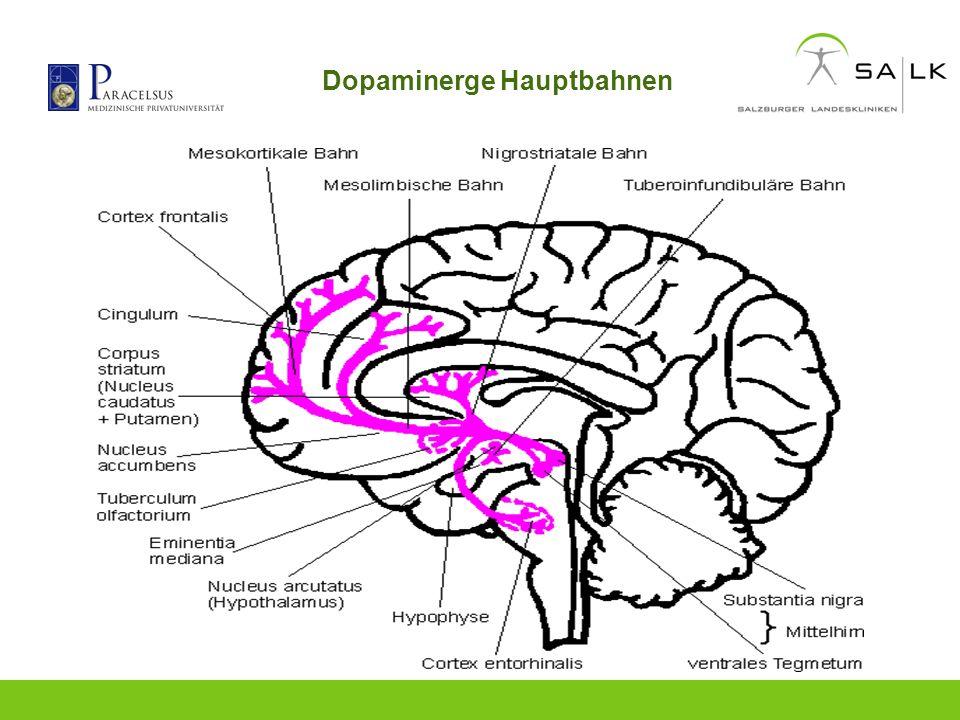 Dopaminerge Hauptbahnen