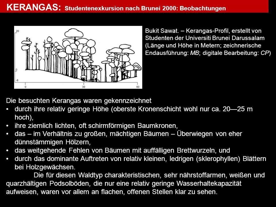 KERANGAS: Studentenexkursion nach Brunei 2000: Beobachtungen