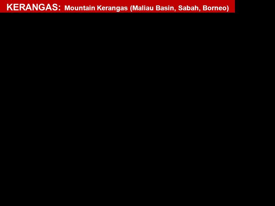 KERANGAS: Mountain Kerangas (Maliau Basin, Sabah, Borneo)