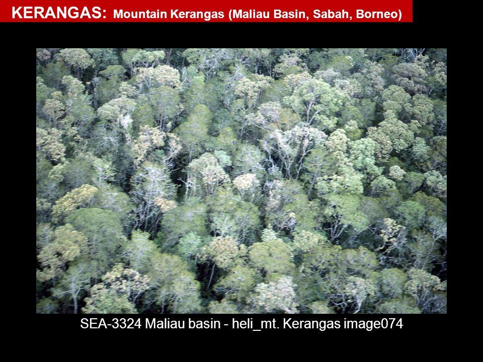 SEA-3324 Maliau basin - heli_mt. Kerangas image074