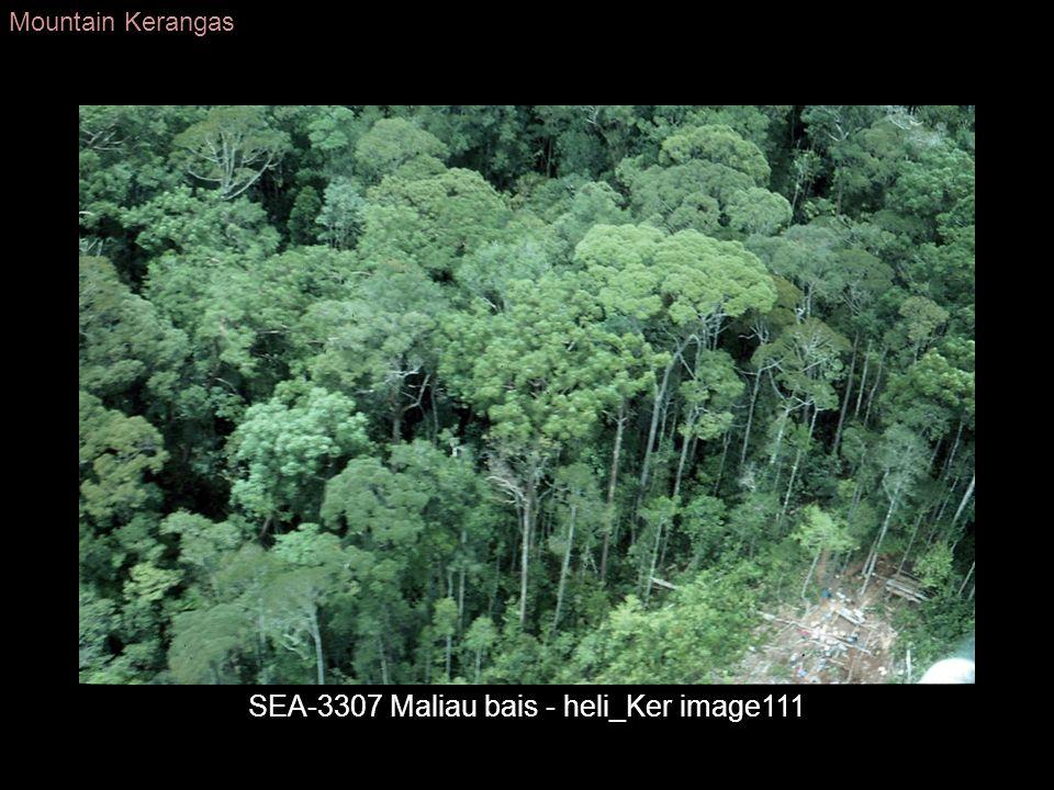 SEA-3307 Maliau bais - heli_Ker image111